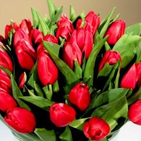 Świat bez kobiet byłby jak ogród bez kwiatów