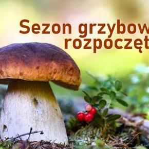 SEZON NA GRZYBY